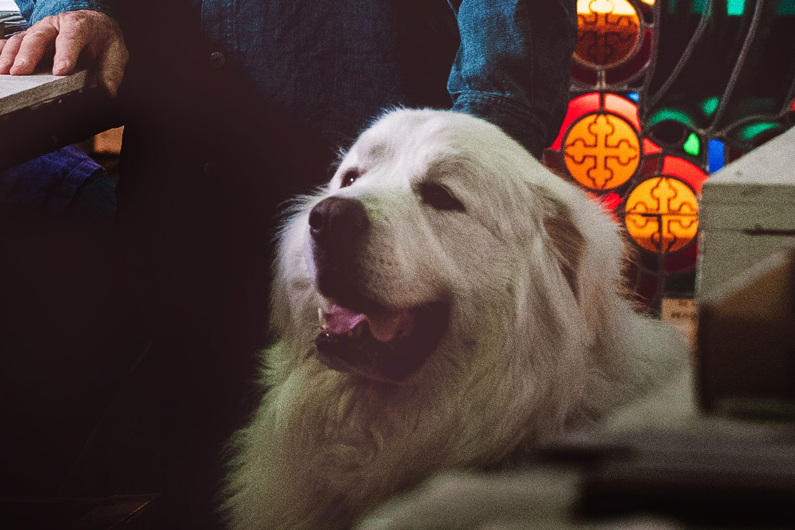 White Great Pyrenees dog in the stained glass studio